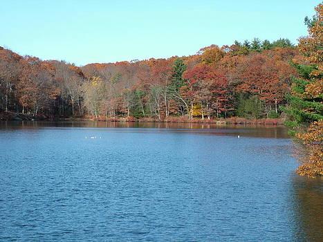 Autumn Pond by Geoffrey McLean