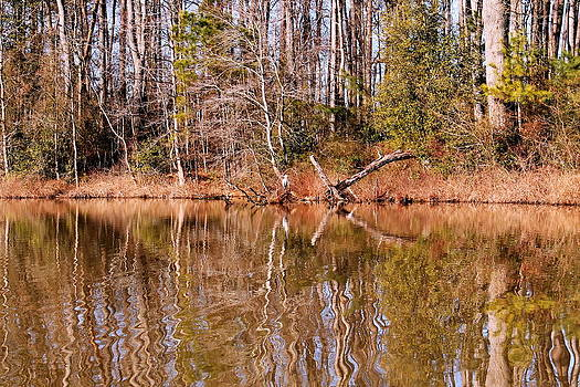 Autumn Pond Reflections by Francie Davis