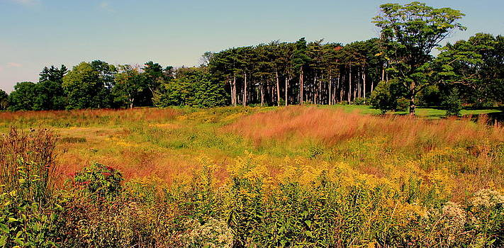 Rosanne Jordan - Autumn Prairie Grasses