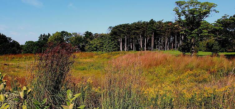 Rosanne Jordan - Autumn Prairie View