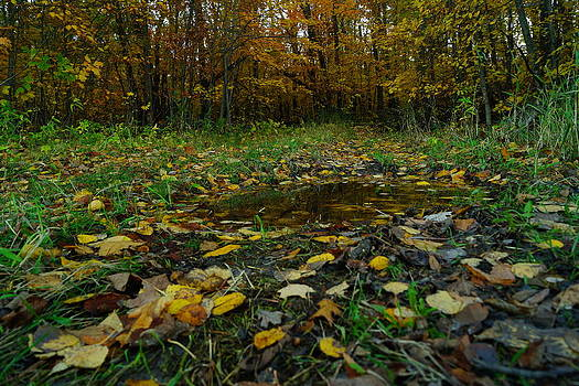 Autumn Puddle by Jann Kline