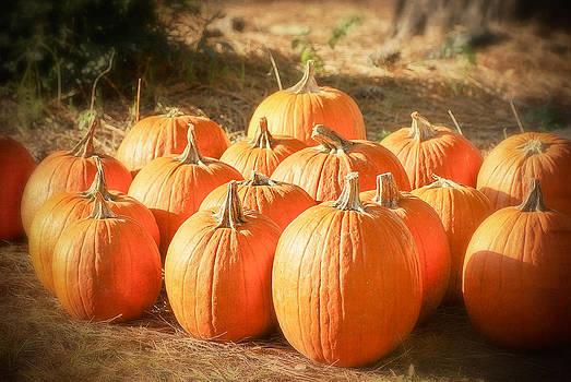 Autumn Pumpkins by Margaretha Brooks
