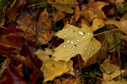 Autumn Rain by Megan Noble