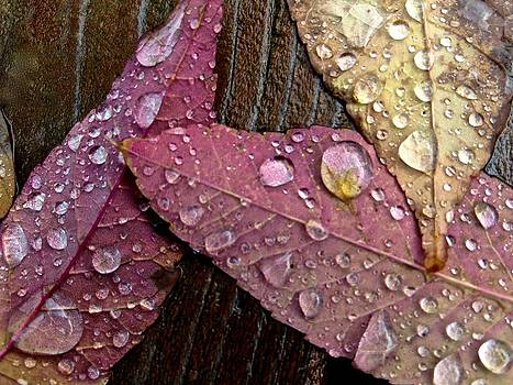 Autumn Raindrops by Rita Mueller