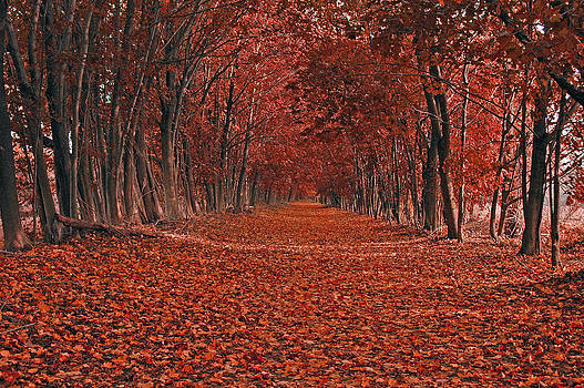 Raymond Salani III - Autumn