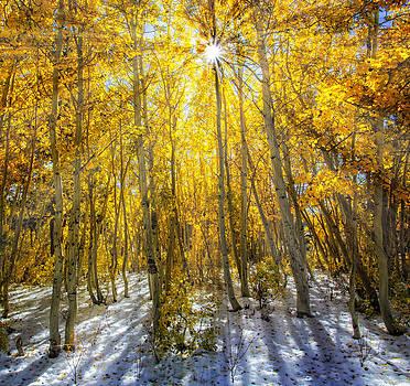 Autumn Rays by Tassanee Angiolillo