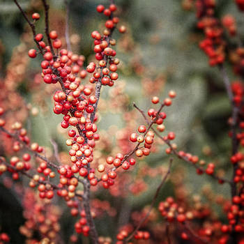 Lisa Russo - Autumn Red Berries Nature Photograph