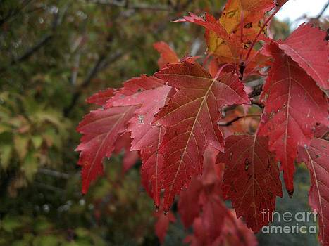 Autumn Red by Crissy Boss