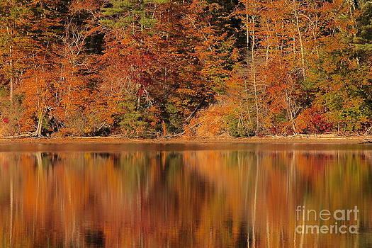 Amazing Jules - Autumn Reflection