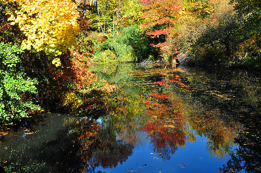 Autumn reflection by Diane Lent