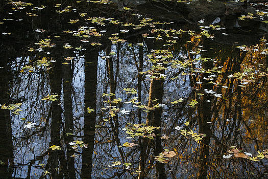 Autumn reflection by Jill Bell