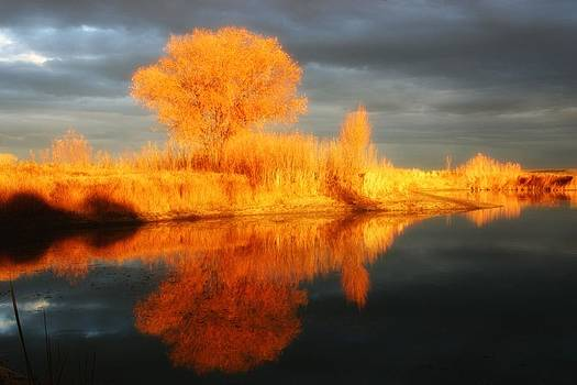 Autumn reflection by Karen Nitz