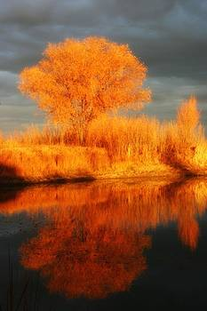 Autumn reflection vertical by Karen Nitz