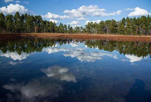 Autumn reflections at Green Swamp by Kelvin Taylor