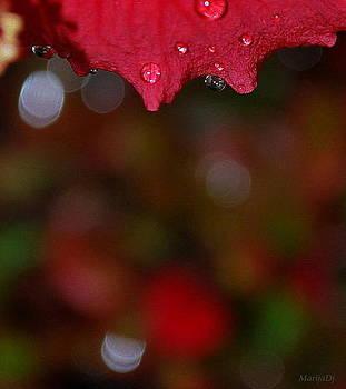 Autumn rhapsody by Marija Djedovic