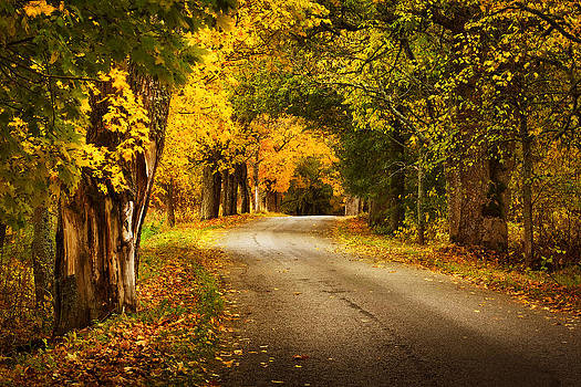 Autumn Road by Anna Grigorjeva