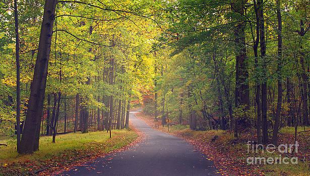 Rima Biswas - Autumn Road