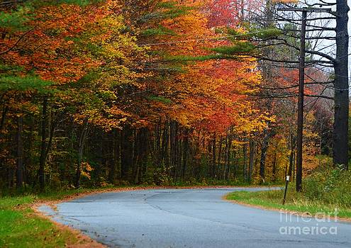 Autumn Road by Sharon L Stacy