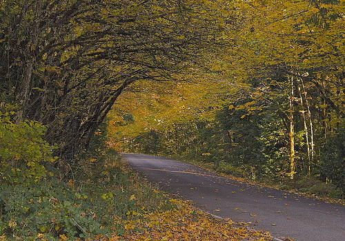 Autumn Road by Tim Rice