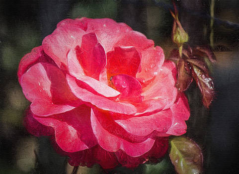 Autumn Rose by Beckie Fitgerald