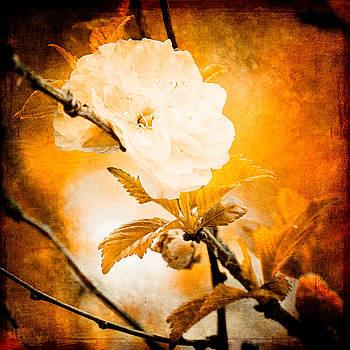 Autumn Rose by Paula Ohreen
