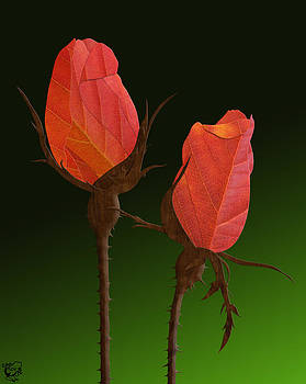 Autumn Rosebuds by Stephen Kinsey