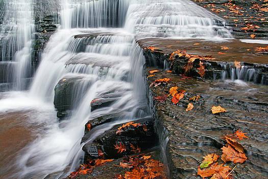 Autumn Rush by David Simons