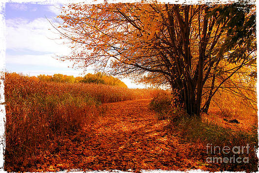 Sophie Vigneault - Autumn Scenery
