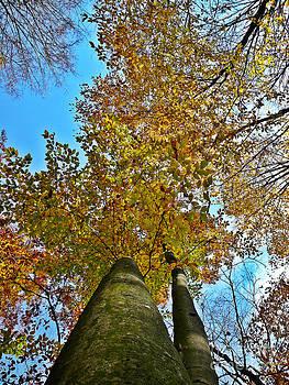 Autumn Sky by Chris Sotiriadis