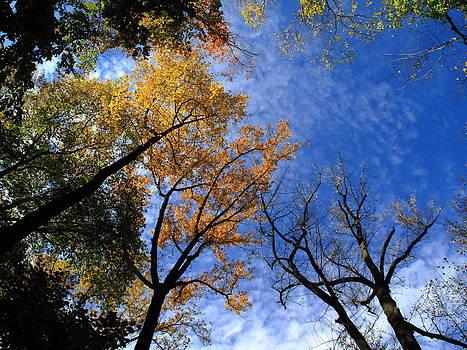 Frank Romeo - Autumn Skyscape