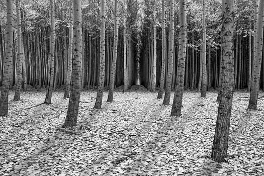 Autumn Snow by Lori Grimmett