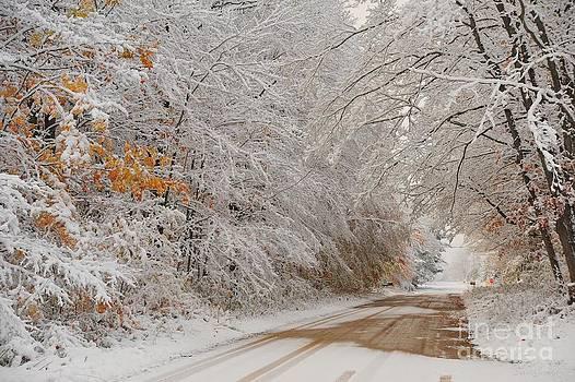 Terri Gostola - Autumn Snowfall