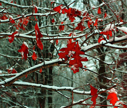 Autumn Snows by William Rockwell