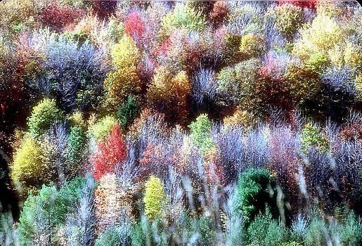 Autumn Sonata by Archie Reyes