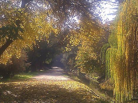 Autumn sparkle by Charys Photography