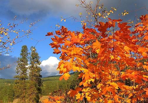 Autumn Splendor 13 by Will Borden
