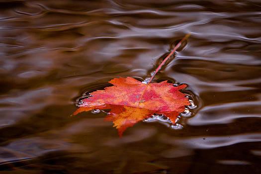 Autumn Splendor by Darren Strubhar