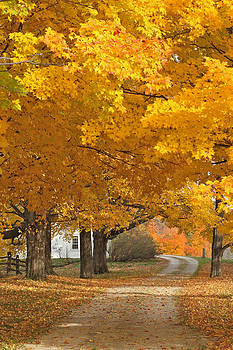 Autumn Splendor by Gail Maloney