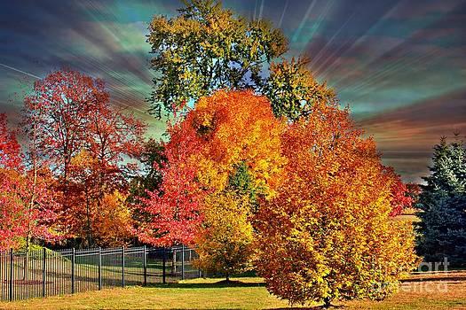 Autumn Splendor by Judy Palkimas
