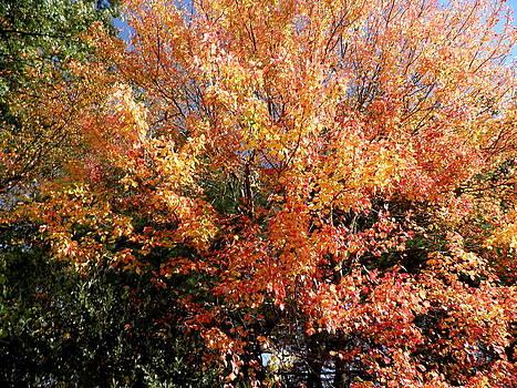 Kate Gallagher - Autumn Splendor
