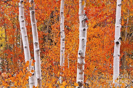 Autumn Splendor by Russ Bishop
