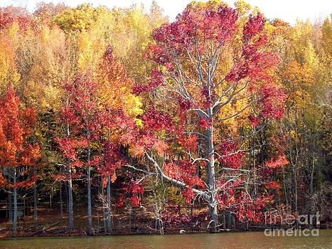Autumn Splendor by Sandra McClure