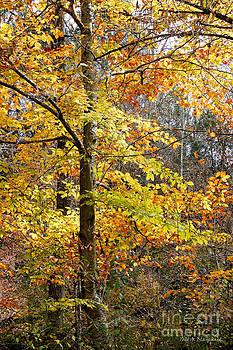 Autumn Splendor by Todd Blanchard