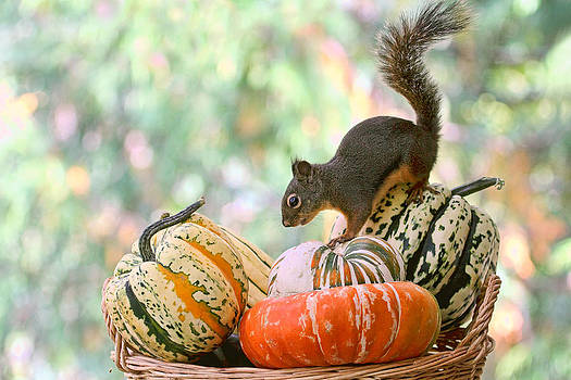Peggy Collins - Autumn Still Life with Squirrel