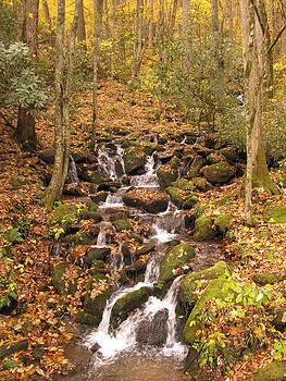 Dennis Cox - Autumn Stream in Smokies