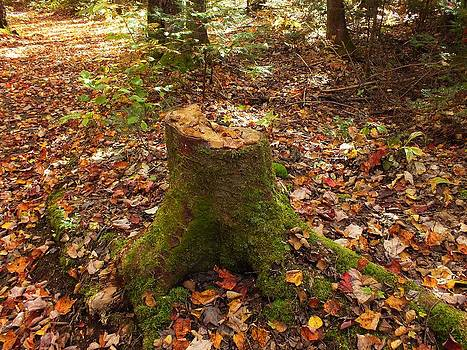 Autumn Stump 1 by Gene Cyr
