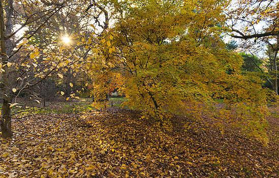 Autumn Sun by Maj Seda