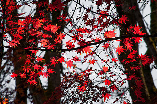 Autumn Time by Crystal Hoeveler