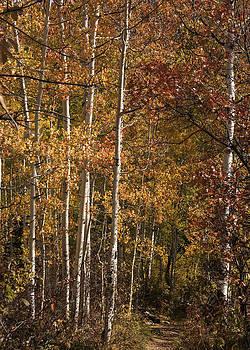 Autumn Trail by Bob Bailey