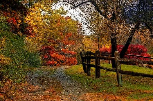 Autumn Trail by Cheryl Cencich
